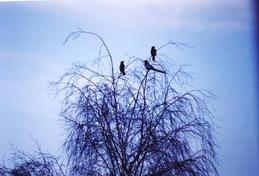 תצלום של טקיטה דין, מתוך הסדרה 'פאי', 2003