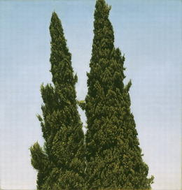 ישראל הרשברג, ברושים, דיוקן כפול ברחביה, 2001, שמן על בד מודבק על עץ